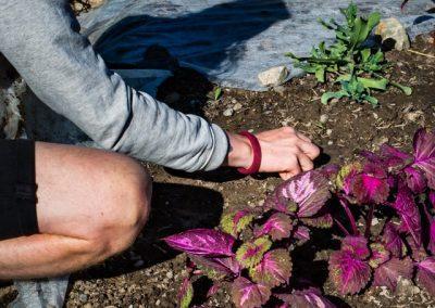 Trädgård & Hantverk